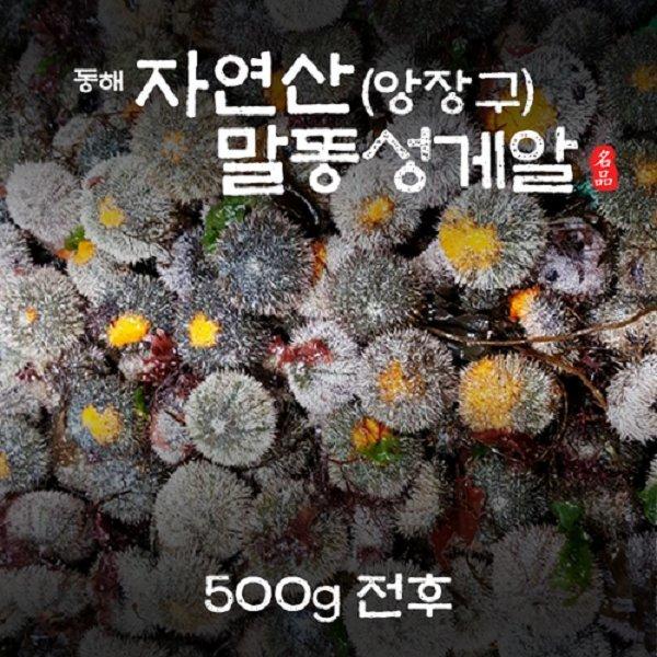 포항죽도수산 동해 자연산 말똥성게알(앙장구) 500G