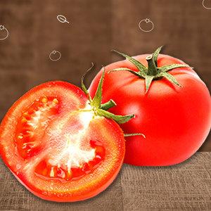야과몰 달콤단단 고당도 토마토 중대과 5kg