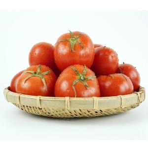자연미가 토망고 스테비아 토마토2kg 12입내외/단마토