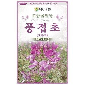 보라색 풍접초 200립 - 풍접초씨앗 풍접초씨 족두리꽃