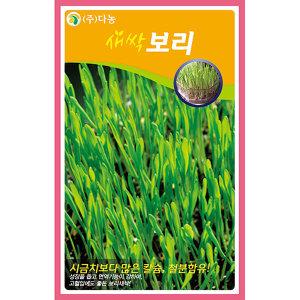 새싹보리 씨앗 1kg 새싹채소씨앗