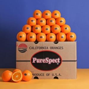 퓨어스펙 블랙라벨 오렌지 55과 8.8kg내외 로얄과특가