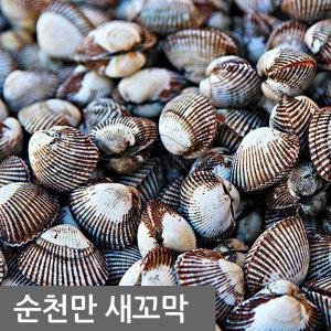 당일채취  벌교 새꼬막 1kg