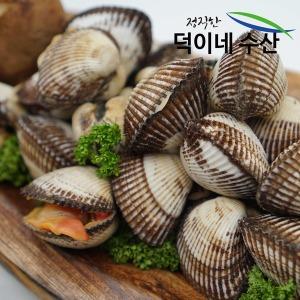 100% 남해안 국내산 새 꼬막 (중)1.5K