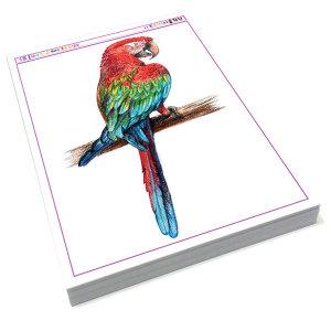 색연필로 과일그리기 동물그리기 보태니컬 미술교재