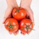 토마토 正品 5kg 중소과 3~4번과