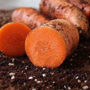 갤러리아  싱싱한 국내산 당근 흙당근 10kg(특품/반찬용)