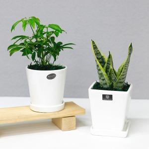 가꾸지오 공기정화식물 사각/원형화분 26종