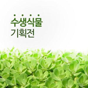 수생식물 기획전/부레옥잠/물배추/워터코인/부상수초