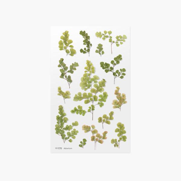 (어프리) 압화스티커 아디안텀 데코 꾸미기 꽃 스티커