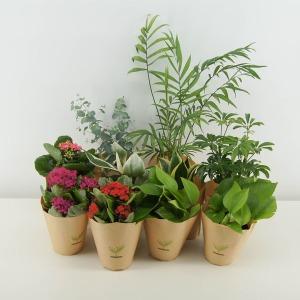 감동샵 공기정화식물 최저가 모음전