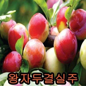 왕자두결실주/철쭉/나무/묘목/구기자/유실수/사과/감