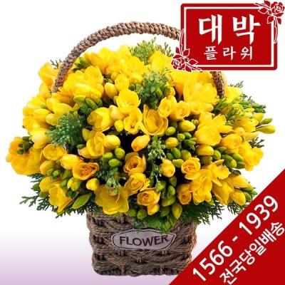 후리지아 꽃바구니 생일 기념일 출산 병문안 꽃배달