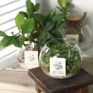 내 책상 위의 작은 정원 공기정화 수경식물 diy 세트