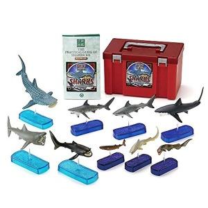 콜로라타 상어 DX 피규어 입체도감 리얼 피규어 박스