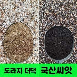 2019년수확/도라지씨앗 500g/더덕씨앗/국산토종종자