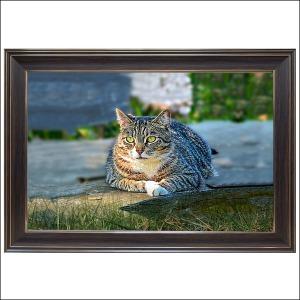 B605-1/고양이사진/대형액자/동물사진/풍경화/벽장식