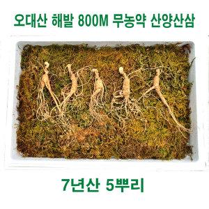 산양산삼 오대산 해발 800m 자란 무농약 7년근 5뿌리