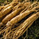 금산 인삼 원수삼 중 750g  5년근 선물용 한채 잔뿌리