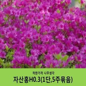 자산홍H0.3(1단5주묶음)