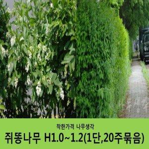 쥐똥나무 H1.0~1.2(1단20주묶음)