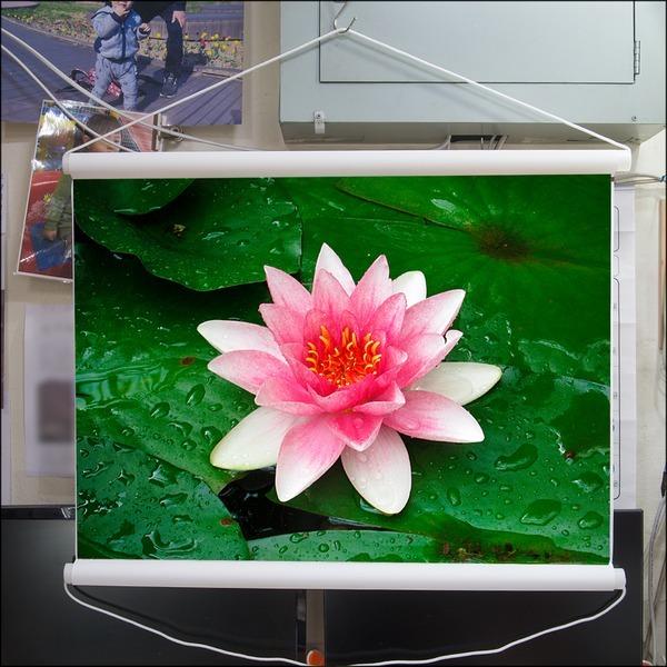 B130-0/연꽃사진/족자/풍경화/풍경사진/인테리어소품