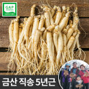 금산인삼 세척 삼계용 수삼 소 750g 5년근 한채 백숙