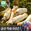 금산 인삼 세척 동가리 대 300g 5뿌리내외 몸통 꿀절