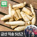 금산 인삼 세척 동가리 소 300g 10뿌리내외 몸통 꿀절