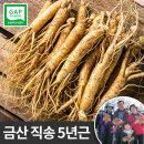 금산 인삼 원수삼 소 750g 5년근 선물용 한채 잔뿌리