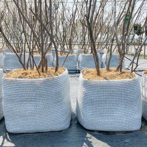 블루베리 묘목 재배 최적화분 대형화분 도로화분