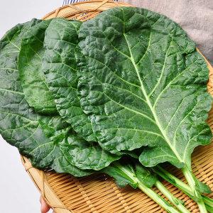 전남담양 김민자님의 유기농 케일 2kg