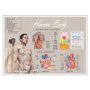 방수포스터 인체포스터_B 내부기관