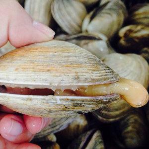 조개구이 끝판왕 자연산 대합(개조개) 1kg