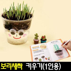 보리새싹키우기(1개)보리씨앗키우기/재배키트/식물