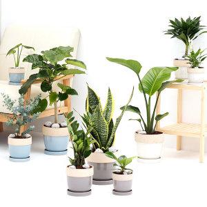 도토리화분 3종세트 공기정화식물 인테리어 소형 중형