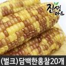 특품 찰옥수수 쫀득쫀득 옥수수 벌크 상품 홍찰 20개