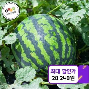 우리네농산물 굿뜨래 수박 9kg/당도선별/쿠폰가 20240
