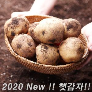 포슬포슬 햇 수미감자 3kg 대 (찜용) 2020 햇 감자