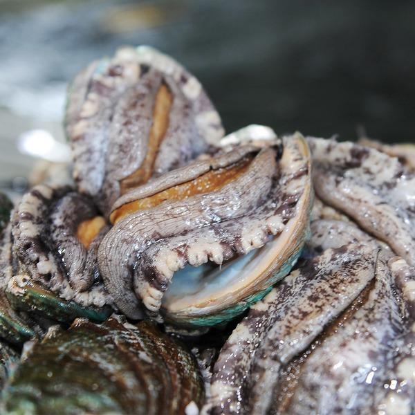 바다마을 푸르른 완도 활전복 찌게용 16~25미400g내외