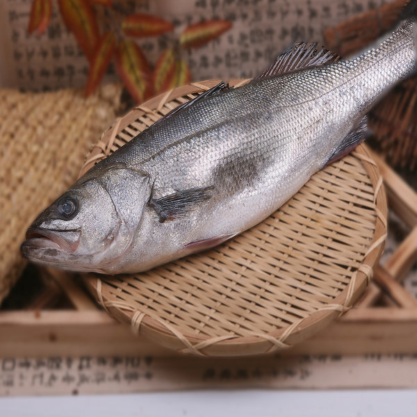 국내산 자연산 반건조통농어 40cm완도군수협 제수용