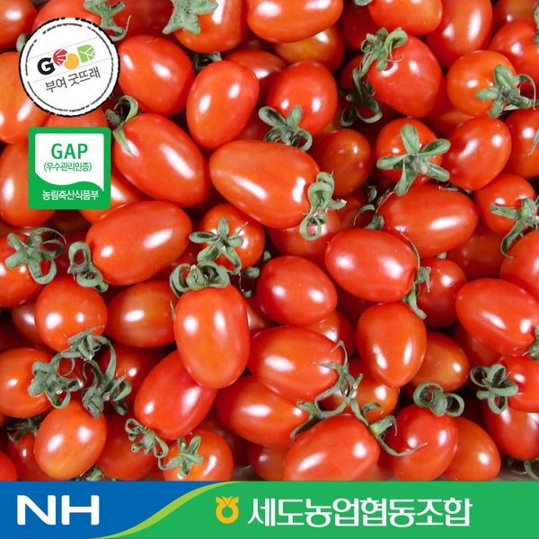 충남 부여 성광모님의 대추방울토마토2kg (1~2번과)