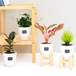 세라믹 원형화분 화이트 38종 공기정화식물