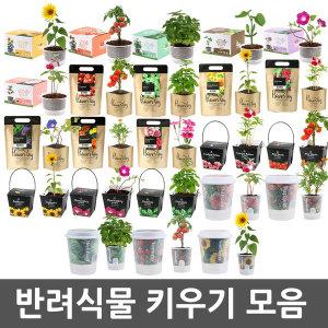 반려식물 키우기 방울토마토 해바라기 강낭콩 봉선화