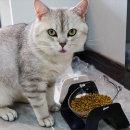 각도조절 밥그릇 고양이 강아지 귀욤 물그릇 식기 용품