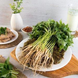 장성 산골짜기농장 새싹삼 랜덤50뿌리