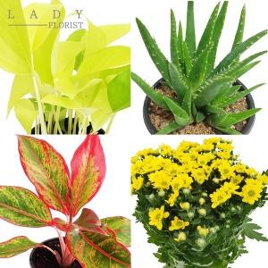공기정화식물/8월신상/미니화분/낱개판매/식물/화초