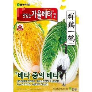 맛있는 가을베타 배추씨앗 300립 김장배추씨앗