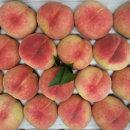 향긋달콤 털복숭아 1.8kg내외 (10과내외)