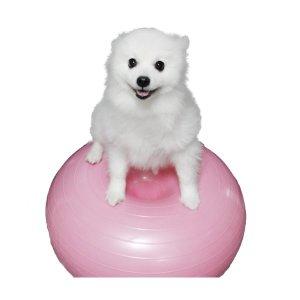 강아지 짐볼 슬개골탈구예방 코어 운동기구 도넛튜브